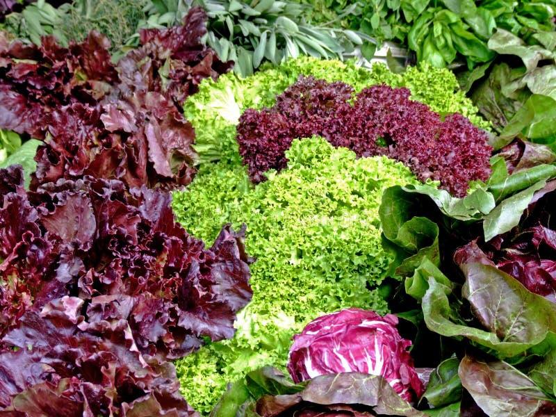 салат органический стоковые фотографии rf