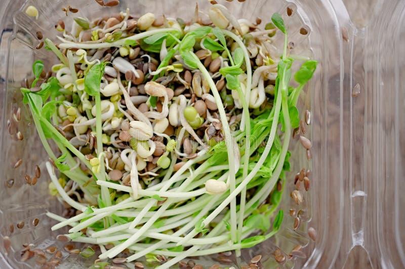 Салат прорастанных семян чечевиц гороха льна и других зерен Macrobiotic концепция еды стоковая фотография rf
