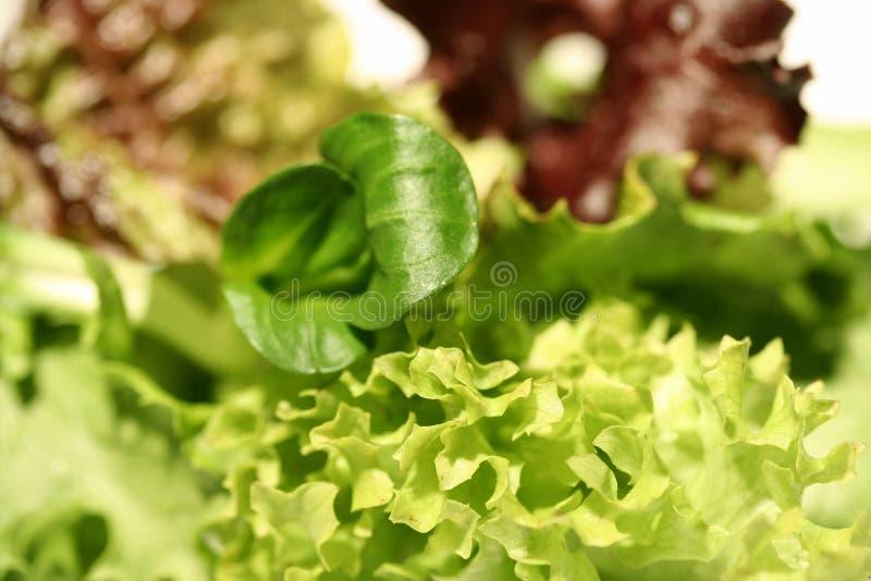 Download салат смешивания стоковое фото. изображение насчитывающей хлебоуборка - 489356