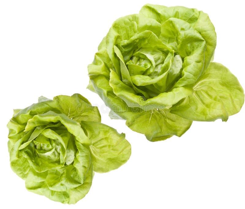 салат bibb hydroponic стоковое фото rf