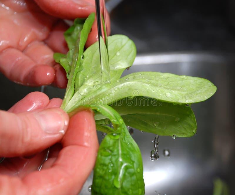 салат rinse стоковые фотографии rf