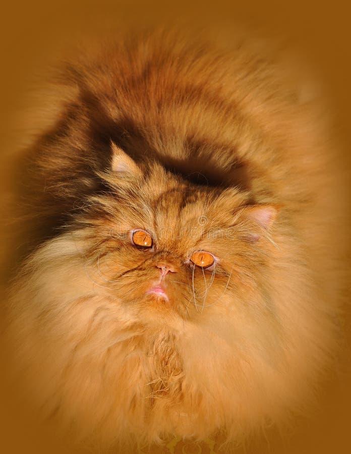 сало кота стоковое изображение rf