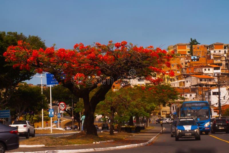 САЛЬВАДОР, БАХЯ, БРАЗИЛИЯ: Favela Современные здания в городе, жилом discrit стоковое фото rf