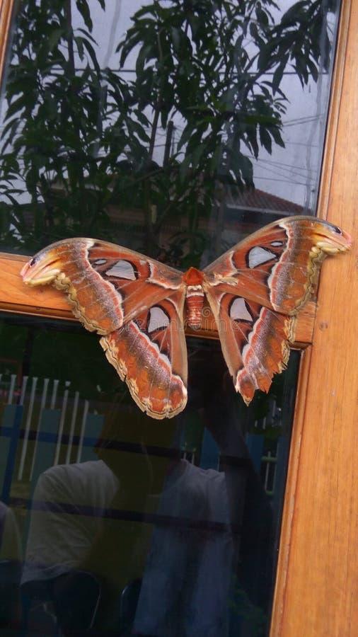 Самая высокая бабочка стоковые фото