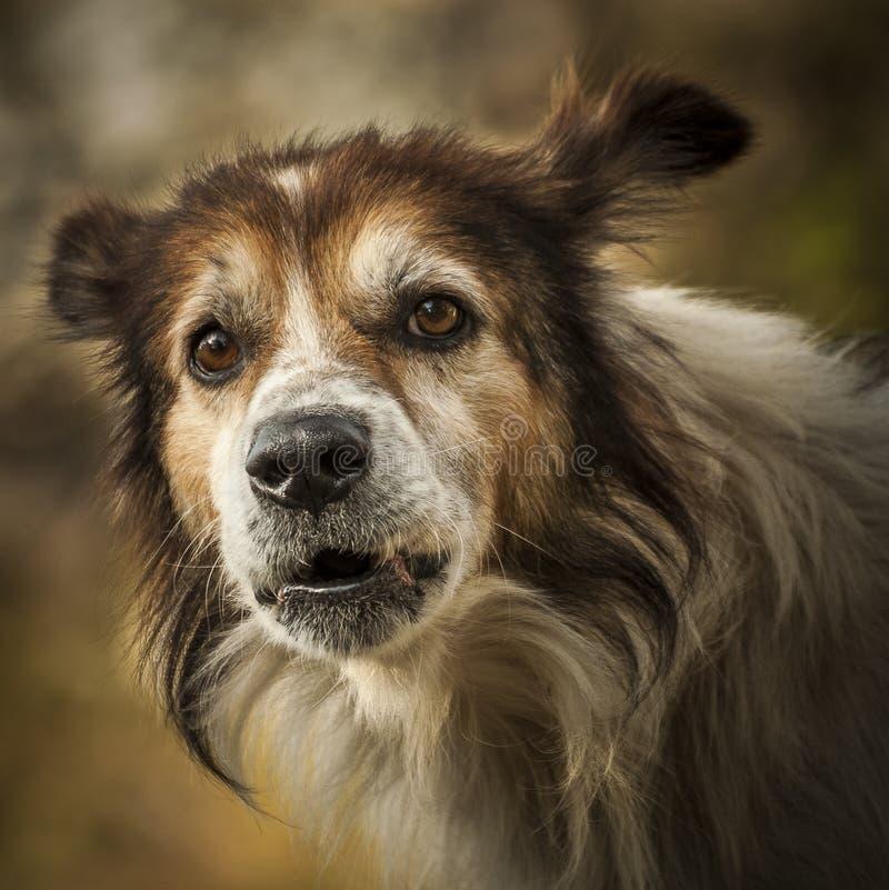 Самая лучшая друг-собака стоковая фотография rf