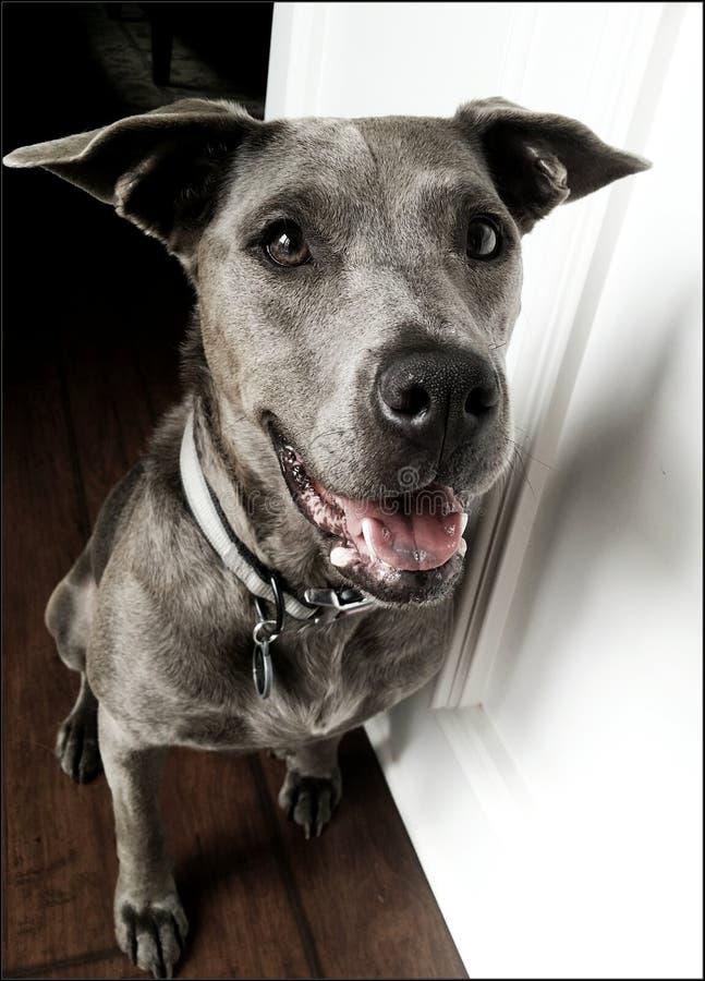 Самая счастливая собака стоковое фото