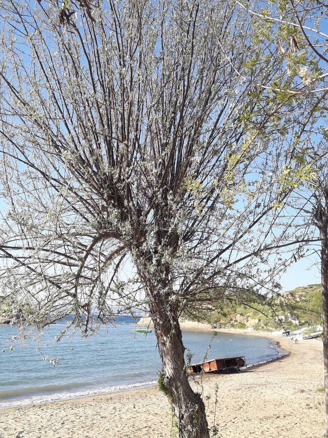 Самостоятельно дерево около пляжа стоковые фотографии rf