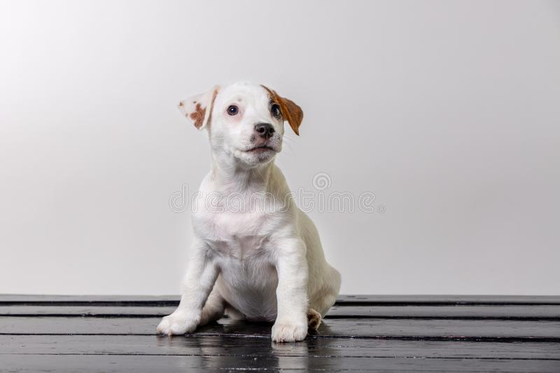 Самостоятельно милая собака мопса грустная и сидеть на шезлонге Скопируйте spase стоковые изображения