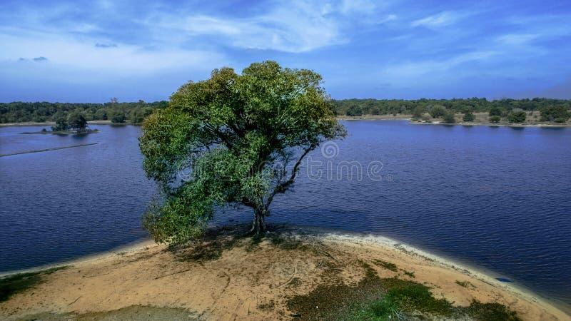 Самостоятельно на мирной земле стоковое изображение rf