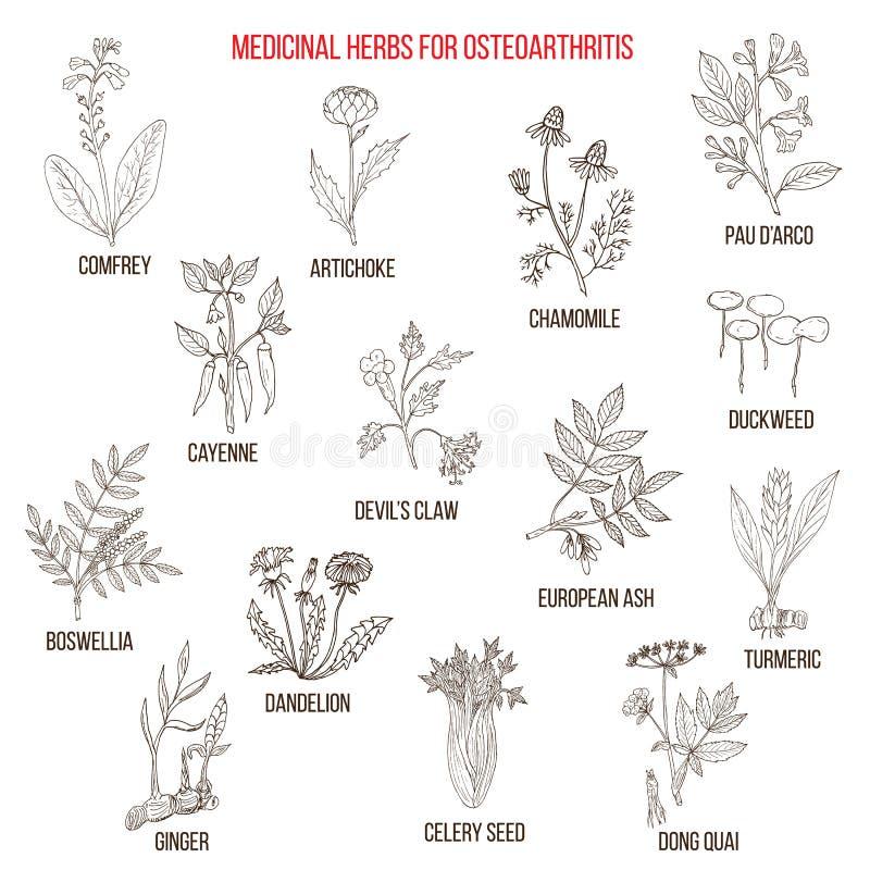Самые лучшие целебные травы для остеоартрита бесплатная иллюстрация