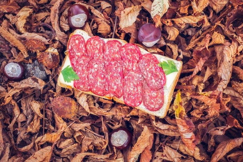 Сандвич осени в лесе стоковая фотография rf
