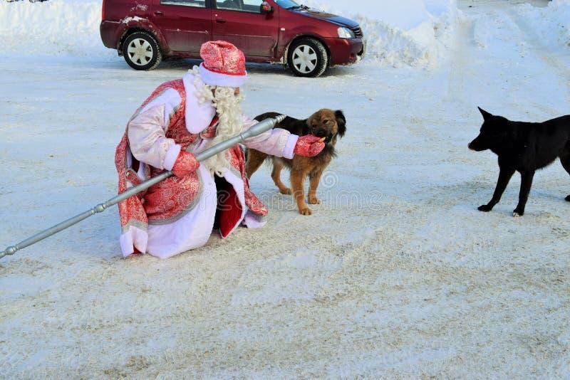 Санта Клаус в зиме на собаках питаний улицы стоковые фотографии rf