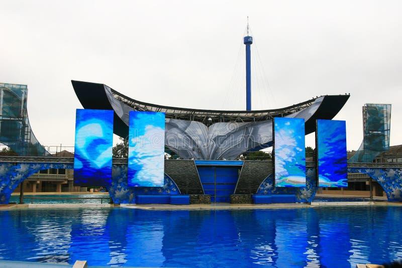 САН-ДИЕГО, КАЛИФОРНИЯ, США - 19-ое августа: выставка shamu дельфин-касатки стоковые изображения rf