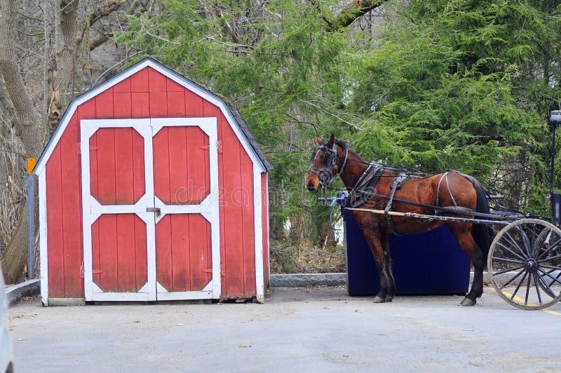 сарай лошади стоковые изображения