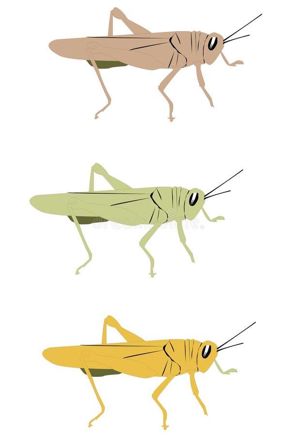 саранчук иллюстрация штока