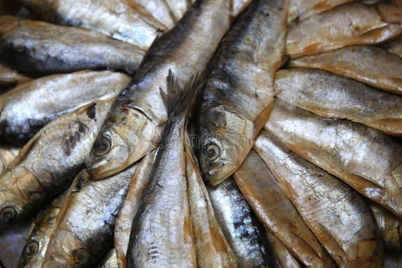 Сардины стоковое изображение rf