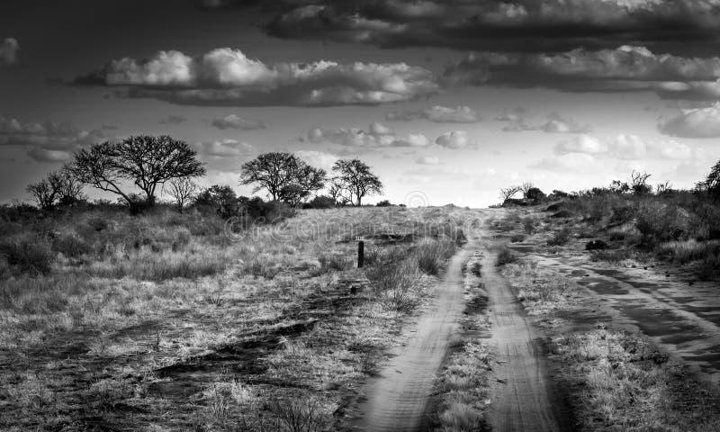 сафари дороги Кении стоковое фото