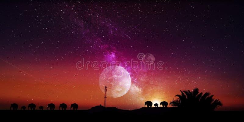 Сафари слона красивый профессионально редактируемый фотоснимок захода солнца стоковые фотографии rf