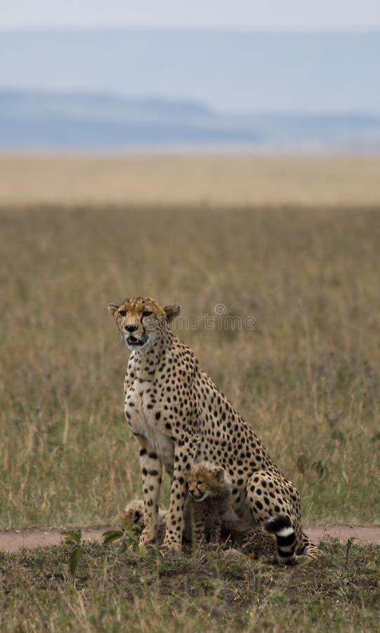 Download сафари стоковое изображение. изображение насчитывающей кения - 6861779