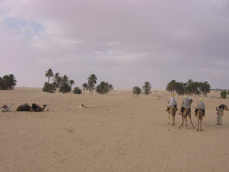 Сахара - Тунис стоковая фотография