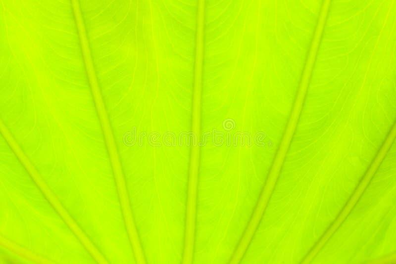 Салатовая предпосылка природы конспекта лист стоковое фото rf