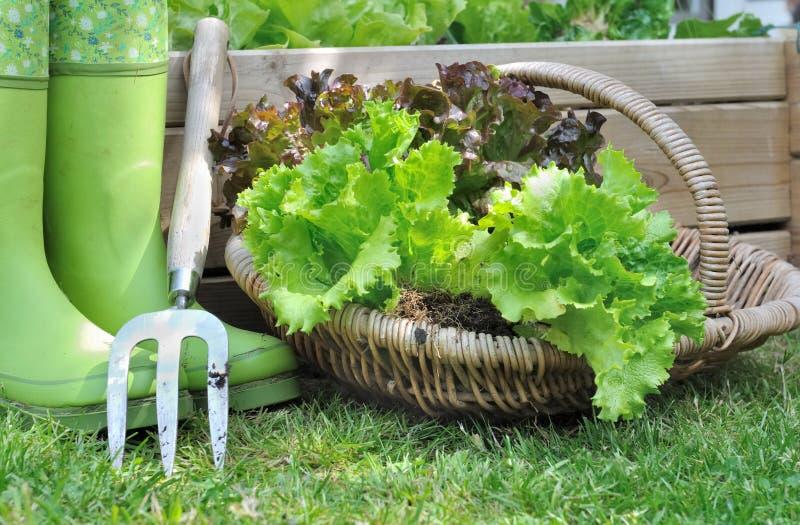 Салат в корзине стоковое изображение