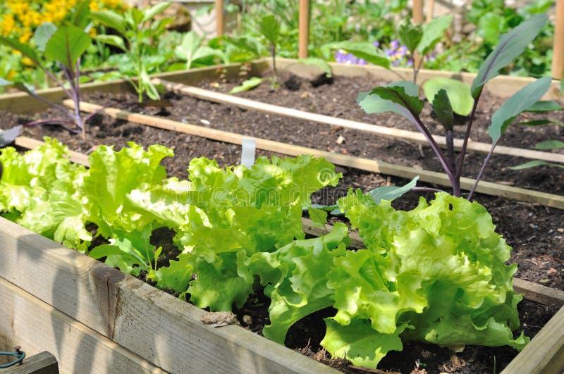 Салат в vegetable заплате стоковые изображения rf