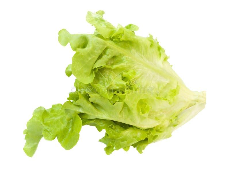 Свежий салат листьев дуба стоковая фотография rf