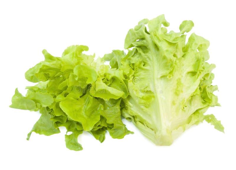 Свежий салат листьев дуба стоковые изображения rf