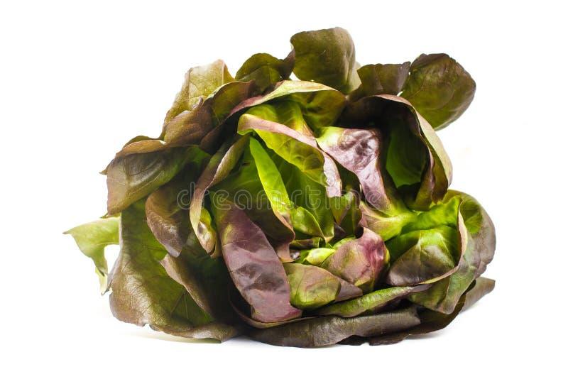 Салат красного цвета младенца стоковое изображение rf