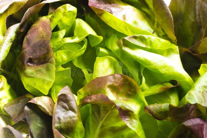 Салат красного цвета младенца стоковая фотография