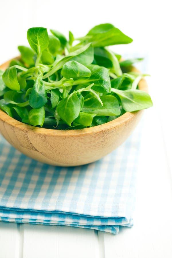 Салат мозоли, салат овечки стоковые фотографии rf