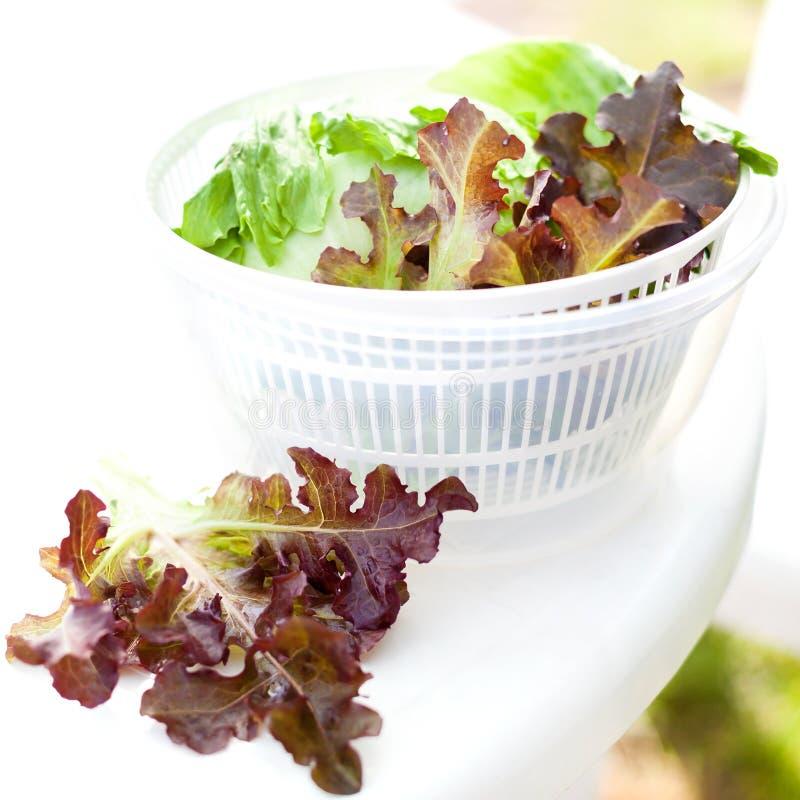 Салат салата в обтекателе втулки стоковая фотография