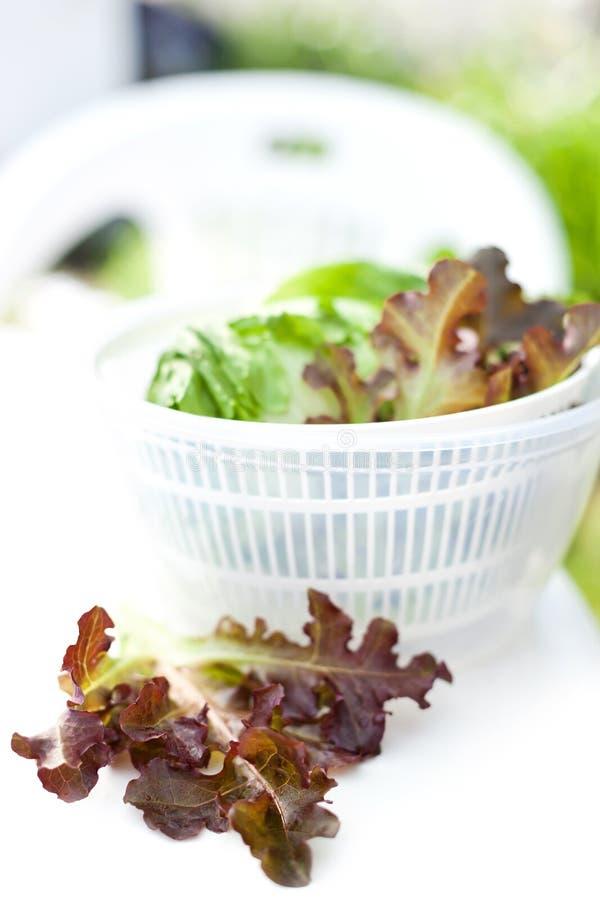 Салат салата в обтекателе втулки стоковые фото