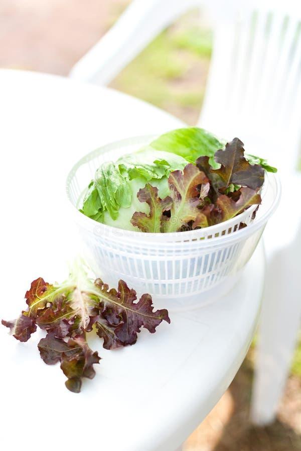 Салат салата в обтекателе втулки стоковые фотографии rf