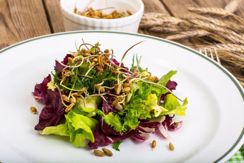 Салат с ростками рож стоковые фото