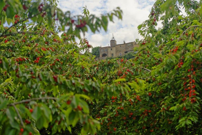 Сад вишневого дерева в Menerbes стоковое изображение