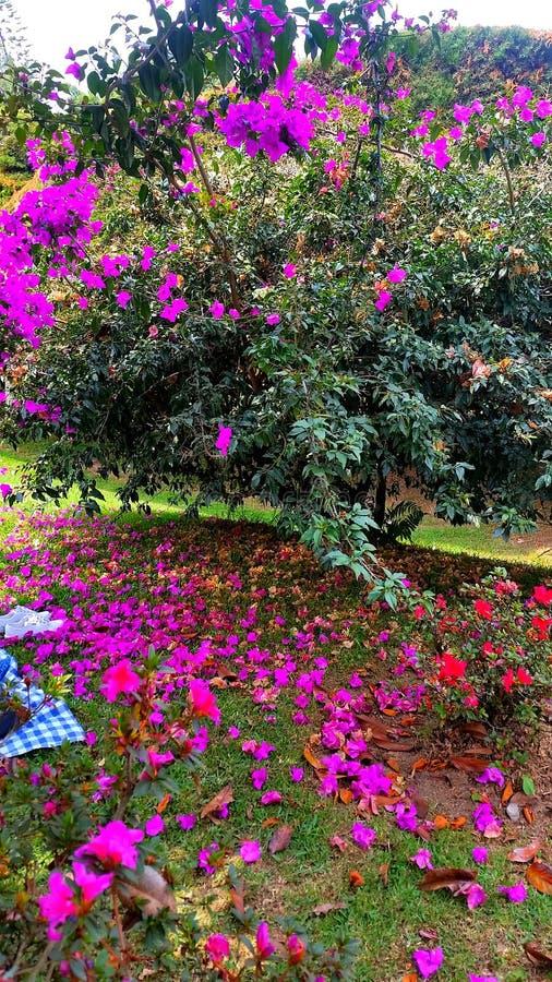 Сад вполне цветов стоковая фотография