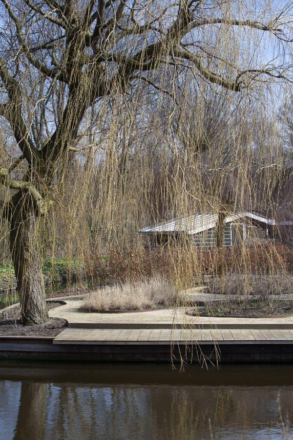 Сад в зиме стоковое изображение rf