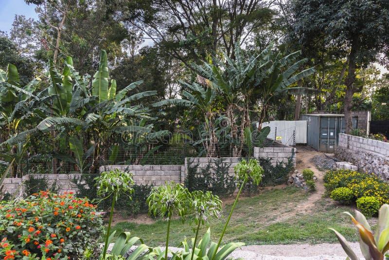 Сад в курортном отеле в Танзании стоковое фото