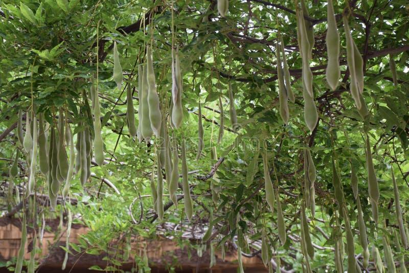 Сад глицинии стоковые изображения rf