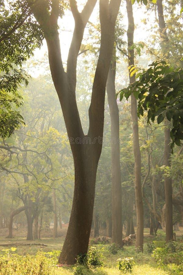 Сад дерева в парке Cubbon на Бангалоре Индии стоковые изображения rf