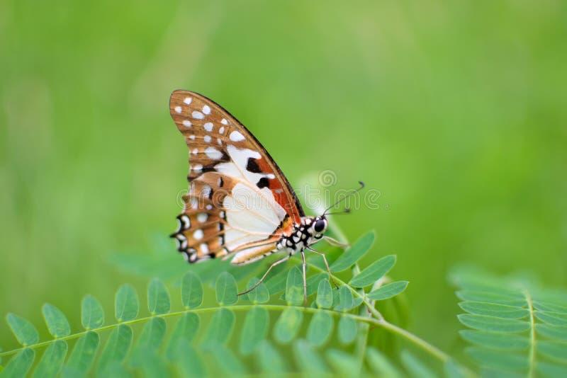 Садить на насест бабочка против зеленой предпосылки стоковые фото