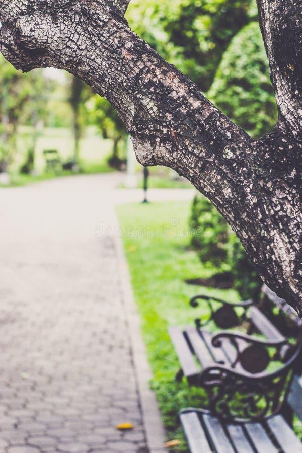 Сад и самостоятельно стоковое фото rf