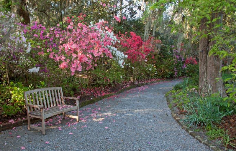 Сад и стенд азалии стоковое фото rf