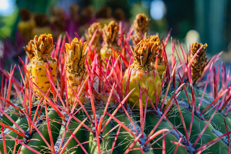 Сад кактуса Аризоны стоковая фотография rf