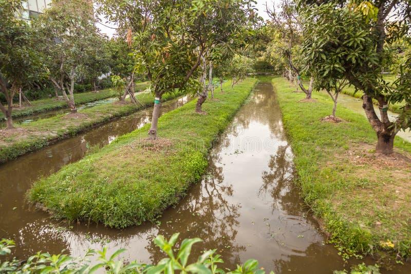 Сад манго стоковые фото