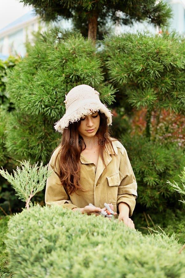 Садовник девушки в одеждах и соломенной шляпе деятельности режет scissoors сада вечнозеленые стоковая фотография rf