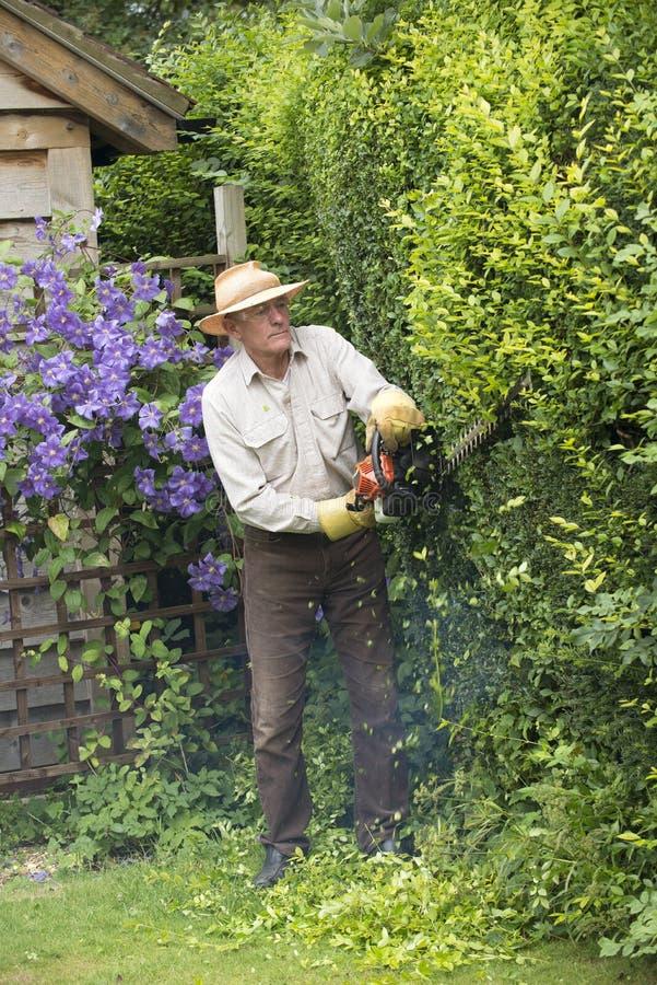 Садовник режа изгородь сада стоковое изображение
