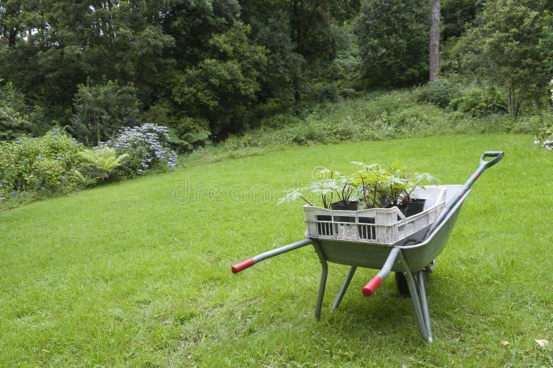 Садовничать в тачке Англии стоковое изображение rf
